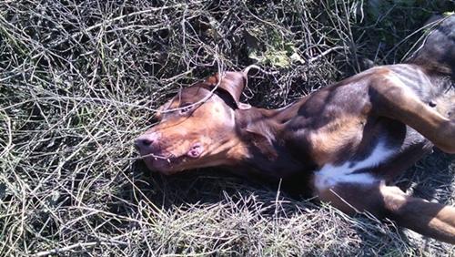 Dogilike.com :: ชื่นชม! หญิงน้ำใจงามช่วยชีวิตแม่สุนัขจรจัดผอมโซและลูก 10 ตัว