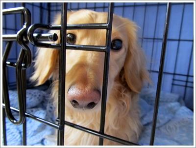 Dogilike.com :: รักสุนัขต้องรู้ !! ปัญหาเชื้อราที่เกิดขึ้นกับน้องหมาในหน้าฝน