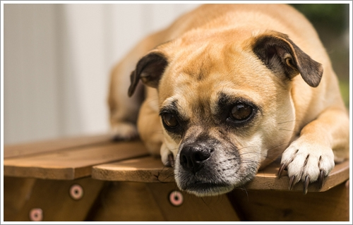 Dogilike.com :: 4 ปัญหาที่น้องหมาถูกเลี้ยงนอกบ้านต้องเจอในหน้าฝน