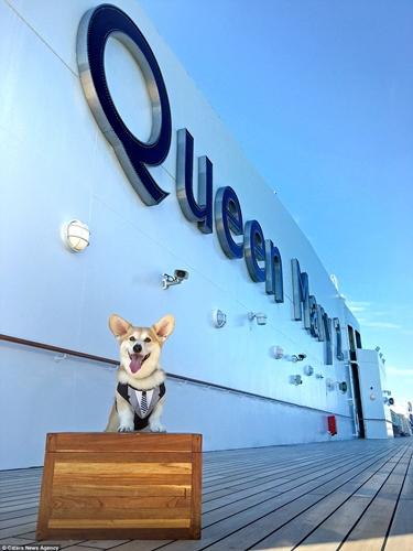 Dogilike.com :: ละลายใจ! เจ้า Wally คอร์กี้หน้าแบ๊วที่ทั่วโลกหลงรักเพราะ รอยยิ้ม