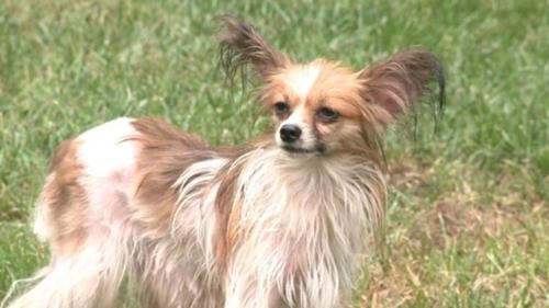 Dogilike.com :: สุดอึด! ตูบจิ๋วใช้ชีวิตในป่าเพียงลำพังนาน 2 ปี เจ้าของดีใจได้พบอีกครั้ง