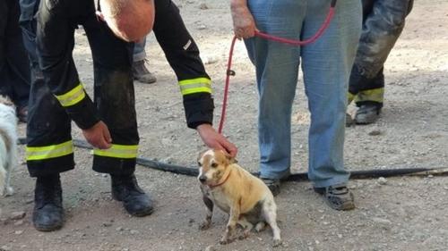 Dogilike.com :: แสบเหลือเกิน !! แจ็ครัสเซลล์ฯ วิ่งไล่กระต่ายจนติดท่อระบายน้ำ ดับเพลิงเร่งมือช่วยชีวิต