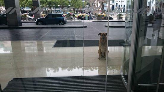 Dogilike.com :: ปลื้ม! แอร์โอสเตสสาวรับเลี้ยงตูบจรจัด หลังนั่งรอหน้าโรงแรมทุกครั้งที่เจอ