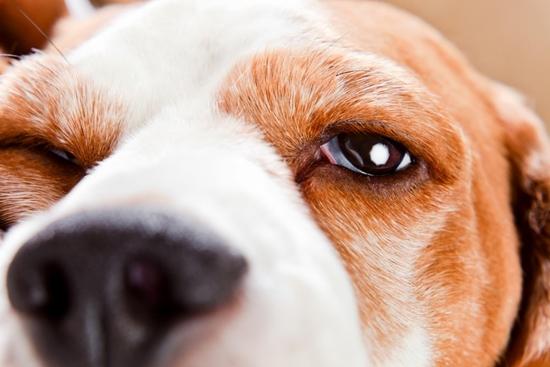 Dogilike.com :: รวม 5 อวัยวะลับ ๆ ในร่างกายของน้องหมาที่หลายคนไม่เคยรู้ !!