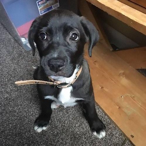 Dogilike.com :: หญิงตกใจขับรถเจอถุงขยะขยับได้กลางถนน เปิดออกพบลูกสุนัขถูกทิ้ง !!