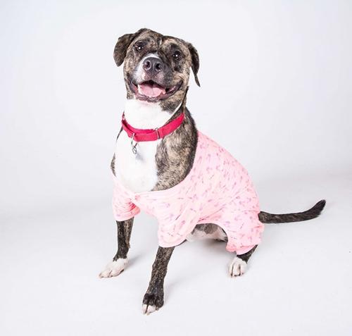 Dogilike.com :: ศูนย์พักพิงสัตว์จัดปาร์ตี้ชุดนอนเจ้าตูบ ให้เห็นมุมน่ารักกระตุ้นการรับเลี้ยง !!