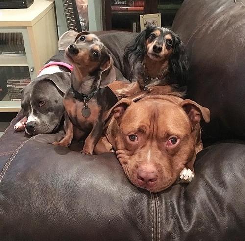 Dogilike.com :: น้องหมาตัวนี้ไม่สามารถหยุดยิ้มได้ หลังถูกรับเลี้ยงจากศูนย์พักพิงสัตว์