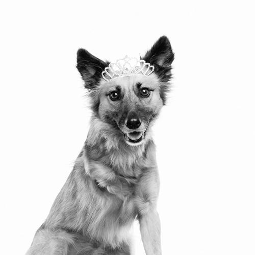 Dogilike.com :: หญิงช่างภาพจับตูบถ่ายปฏิทินนำรายได้ช่วยเหลือสัตว์ ทำมานานกว่า 6 ปี !!