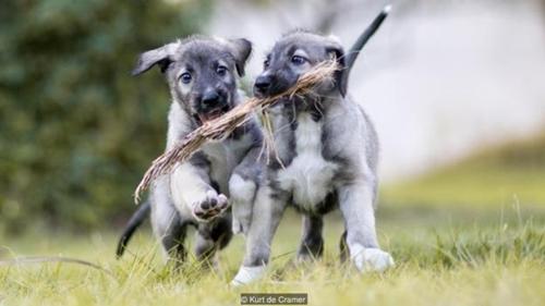 Dogilike.com :: ยลโฉม ! ลูกสุนัขฝาแฝดคู่แรกของโลก เหมือนเป๊ะทุกสัดส่วน