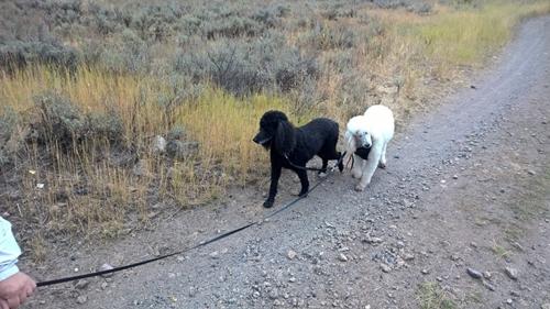 Dogilike.com :: ไปไหนไปกัน! เจ้าตูบแสนรู้ผลัดกันจูงเพื่อนตาบอด หูหนวกเดินทางผจญภัย