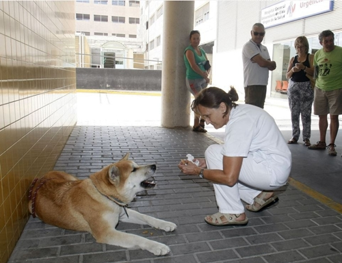 Dogilike.com :: สุดซึ้ง! ตูบซื่อสัตย์นอนเฝ้าเจ้าของป่วย หน้าโรงพยาบาลไม่ยอมไปไหน