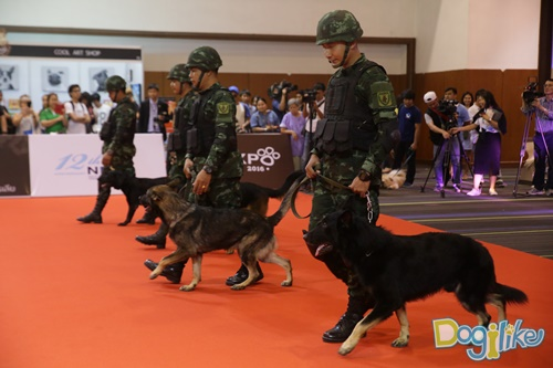 Dogilike.com :: Dogilike พาเที่ยวพาทัวร์ PET EXPO 2016 ตอนที่ 1