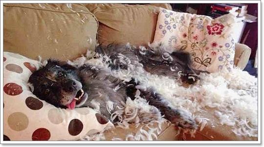 Dogilike.com :: รวมภาพฮาๆ เมื่อปล่อยน้องหมาให้อยู่บ้านตัวเดียว