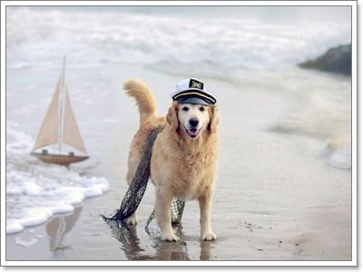 Dogilike.com :: ภาพน่ารักๆ เมื่อน้องหมาไปเที่ยวทะเล