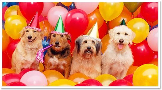 Dogilike.com :: รวมภาพสุดน่ารัก เมื่อน้องหมานัดกันจัดงานปาร์ตี้