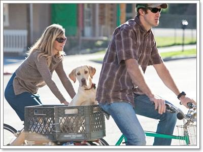 Dogilike.com :: รวมภาพน่ารักๆ น้องหมาซ้อนท้ายจักรยาน