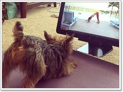 Dogilike.com :: ภาพน่ารักๆ เมือน้องหมาเล่นโยคะ