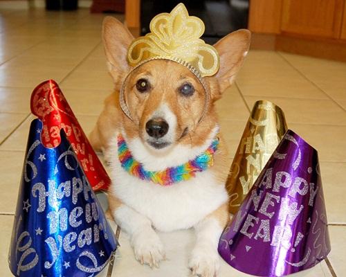 Dogilike.com ::  รวมภาพน้องหมาเค้าท์ดาวน์ ปาร์ตี้ปีใหม่