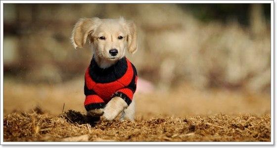 Dogilike.com :: หนอนพยาธิในสุนัข ปรสิตร้ายที่หลายคนมองข้าม