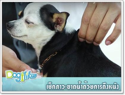 Dogilike.com :: 5 อาการต้องเฝ้าระวังในสุนัขป่วยโรคไตวายเรื้อรัง