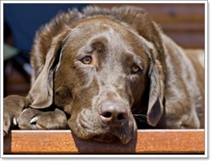 Dogilike.com :: ตามหาสาเหตุของอาการ ซึม ของน้องหมาว่าเกิดจากอะไรบ้าง?