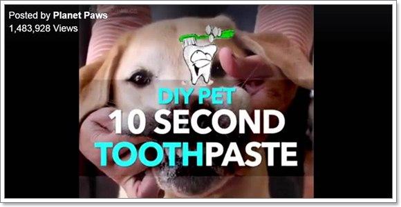 Dogilike.com :: ใช้ Baking soda กับฟันน้องหมา ปลอดภัยจริงหรอ?