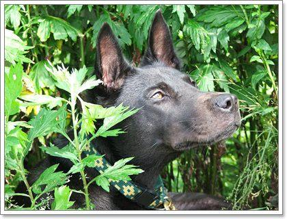 Dogilike.com :: ปฐมพยาบาลน้องหมาด้วยพืชสมุนไพรใกล้ตัว