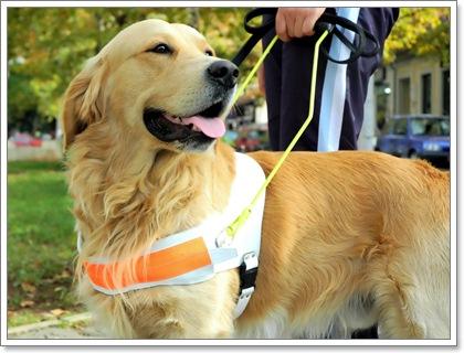 Dogilike.com :: 3 โรคร้ายของมนุษย์ ที่สุนัขสามารถรับรู้และช่วยเตือนเราได้