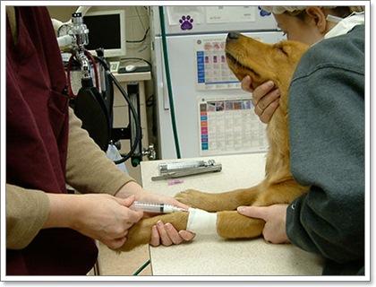 Dogilike.com :: 5 คำถามยอดฮิต เมื่อน้องหมาต้องเข้ารับการวางยาสลบ