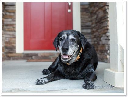 Dogilike.com :: คำถามสุขภาพในสุนัขสูงวัยที่เจ้าของต้องรู้ ตอนที่ 1