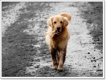 Dogilike.com :: 5 โรคเสี่ยงของน้องหมาในหน้าฝน...ที่เจ้าของมักมองข้ามไป