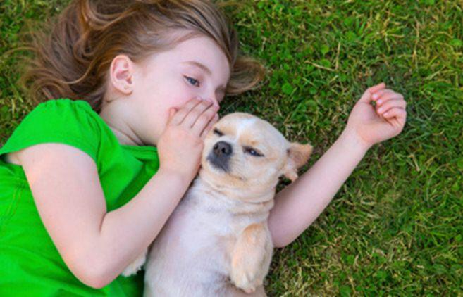 Dogilike.com :: เผยความลับของ 10 สายพันธุ์สุนัขที่คุณอาจไม่เคยรู้มาก่อน