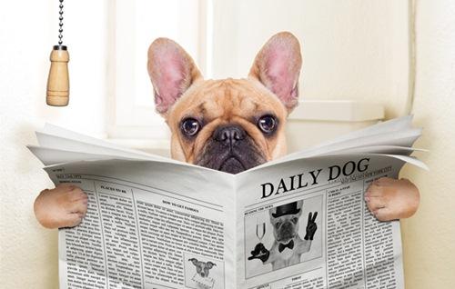 Dogilike.com :: ไขปมลับ ปัญหาอาเจียนและท้องเสียในสุนัขที่หลายคนอยากรู้