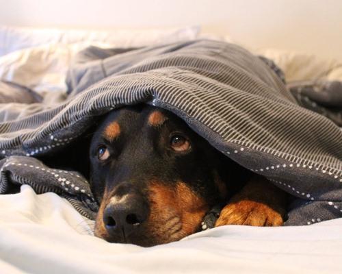 Dogilike.com :: 4 พันธุ์สุนัขที่ดูเหมือนจะแข็งแรง แต่มีโรคประจำพันธุ์เยอะไม่ใช่เล่น!