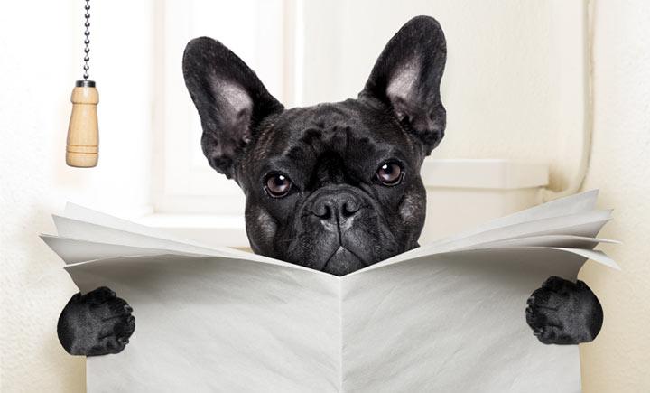 Dogilike.com :: ผลวิจัยชี้ จุลินทรีย์ในอึ (อาจ) ช่วยพยากรณ์โรค IBD. ในสุนัขได้