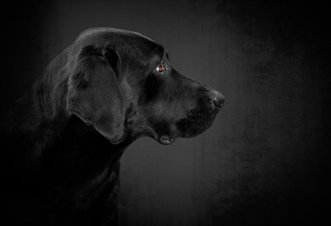 Dogilike.com :: 5 โรคพันธุกรรมยอดฮิตในน้องหมา