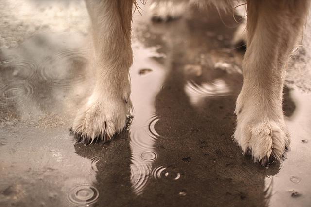 Dogilike.com :: แอบดูพฤติกรรมแปลก ๆ ป่วน ๆ ของน้องหมาในหน้าฝน
