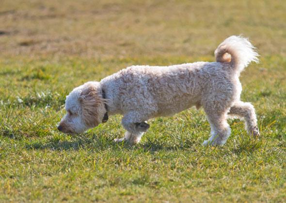 Dogilike.com :: แก้ปัญหาน้องหมาไม่ยอมขับถ่ายในหน้าฝน