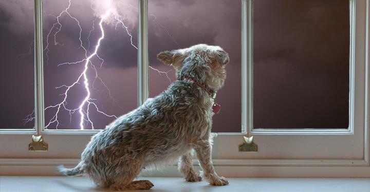 Dogilike.com :: หาคำตอบให้ปัญหาโลกแตก ทำไมน้องหมาถึงกลัวฟ้าร้อง?