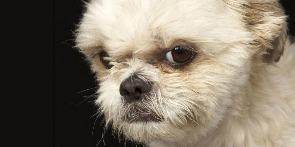 Dogilike.com :: 5 สัญญาณที่บอกว่า น้องหมามั่นใจในตัวเองจนนิสัยเสีย!!