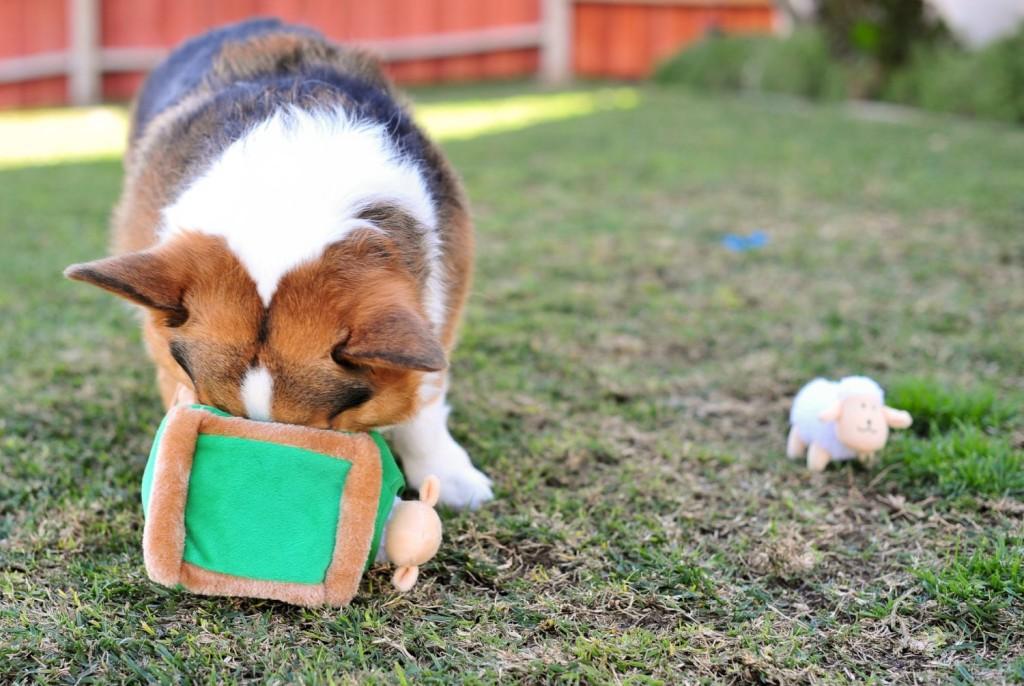 Dogilike.com :: 5 คำสั่งมีประโยชน์ ฝึกน้องหมาให้ช่วยเราทำงานได้!!