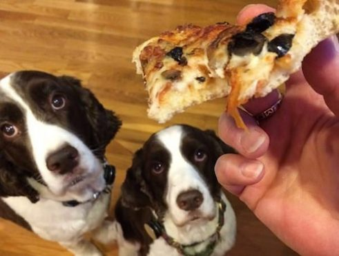 Dogilike.com :: รวมเทคนิค ดัดนิสัยน้องหมาจอมตะกละขี้ขโมยอาหาร