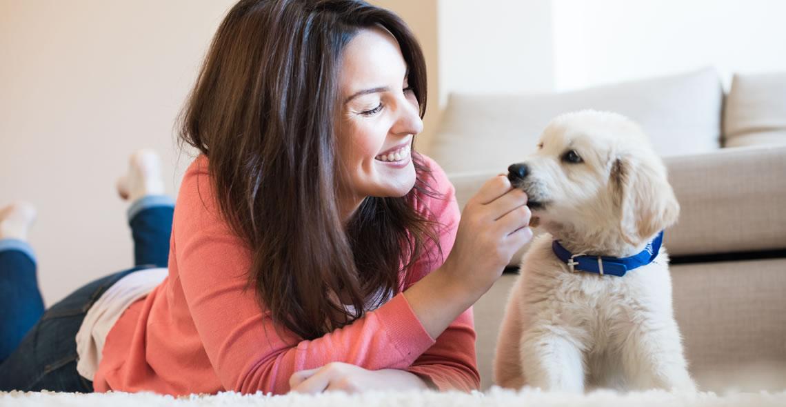 Dogilike.com :: 5 สมดุลที่ต้องปรับให้ลูกหมา เพื่อให้โตไปเป็นหมานิสัยดี