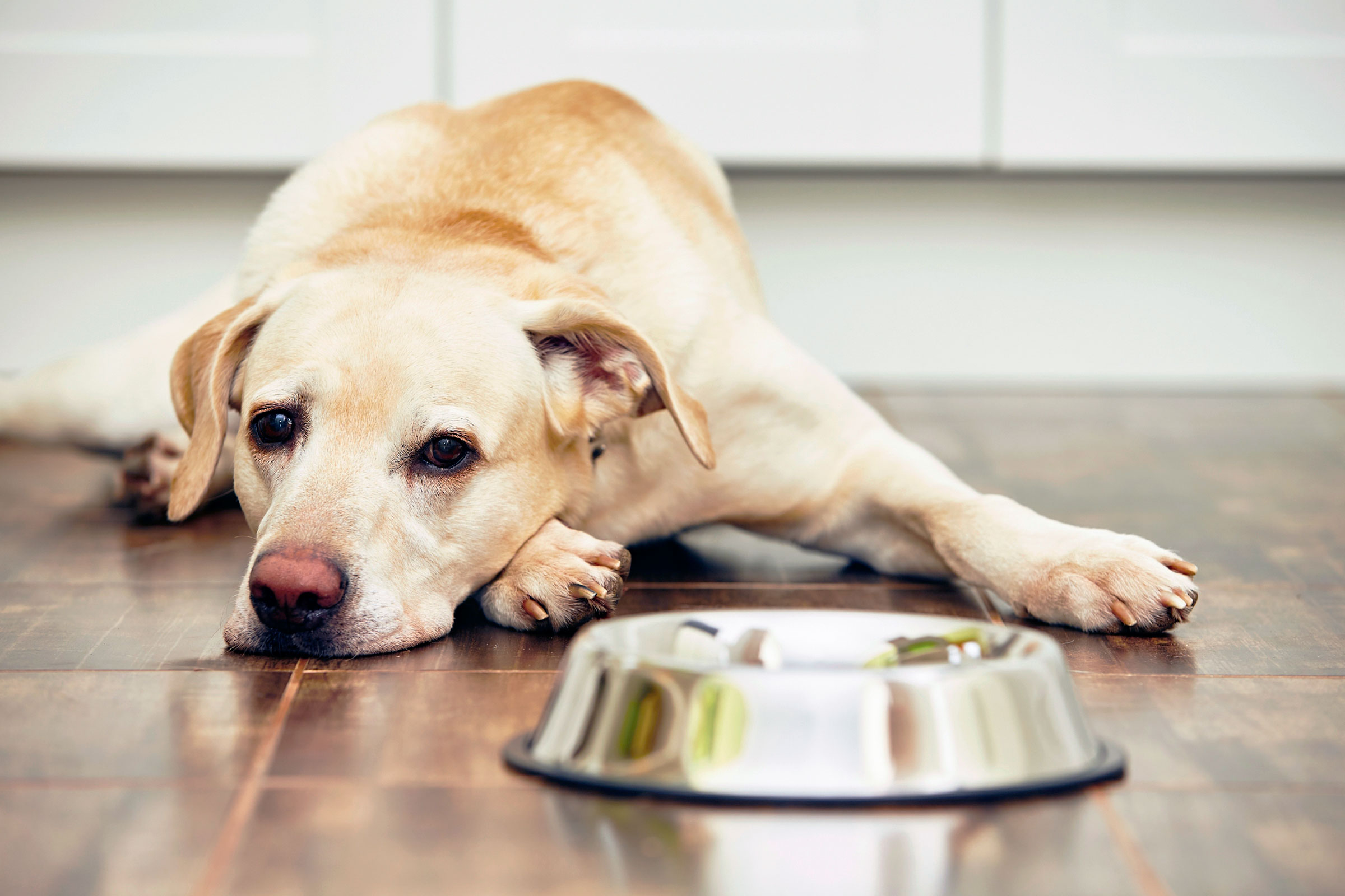Dogilike.com :: 4 พฤติกรรมน้องหมาพาเพลีย ที่เจ้าของต้องเจอในหน้าร้อนนี้!