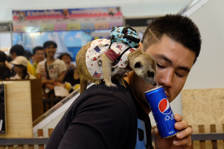 Dogilike.com :: มาแล้ว งานแฟร์สัตว์เลี้ยงแห่งปีที่ทุกคนรอคอย PET EXPO THAILAND 2017