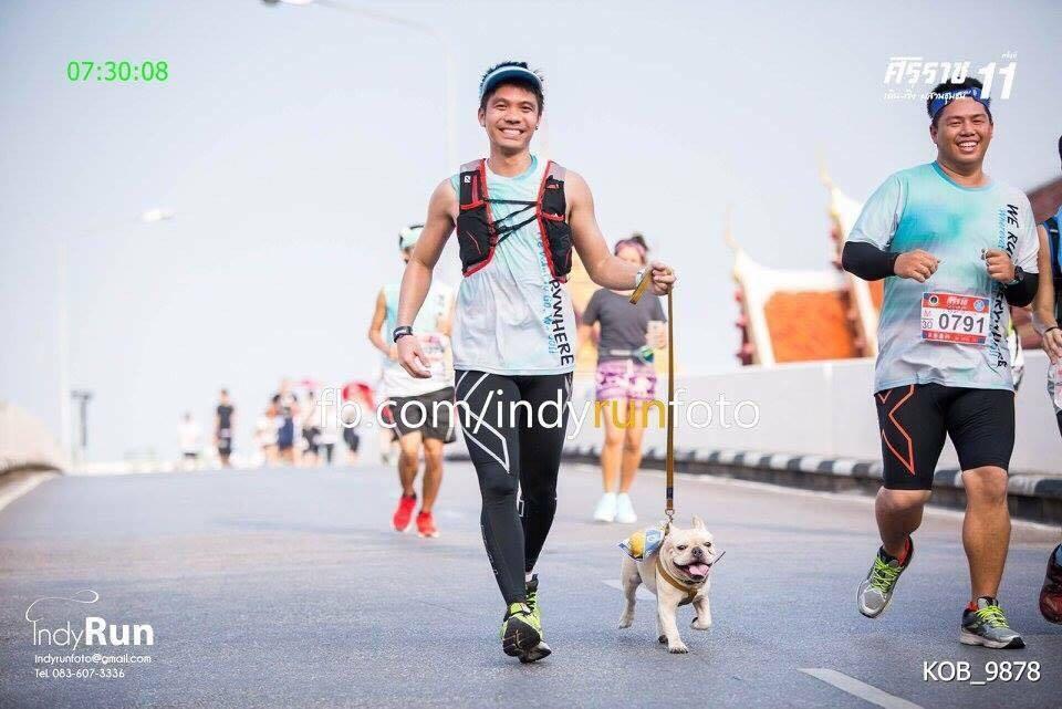 Dogilike.com :: หน้าสั้นแต่ใจสู้ ... โยด้า น้องหมาเฟรนช์ วิ่งมินิมาราธอนได้ไกลถึง 14 กิโล!!!