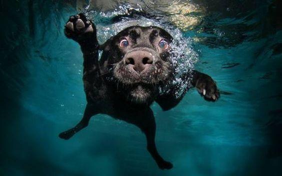 Dogilike.com :: จัดอันดับ หมาบ้าน้ำ เห็นน้ำเป็นไม่ได้ต้องแช่!! (ไม่เรียงลำดับนะ)