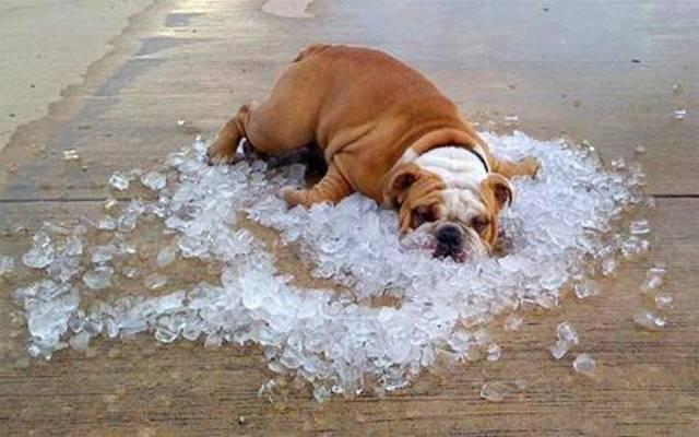 Dogilike.com :: จัดอันดับ อันตรายที่เสี่ยงเกิดกับหมาในหน้าร้อน (ไม่เรียงลำดับนะ)