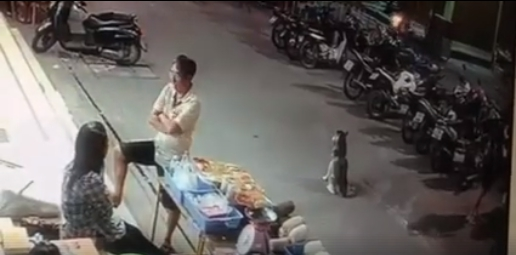 Dogilike.com :: เหตุการณ์ไซบีเรียนถูกรถชน ดราม่าร้อนอุทาหรณ์สอนใจคนรักน้องหมา