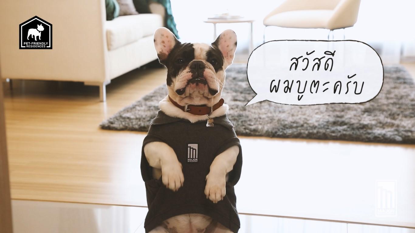 Dogilike.com :: ตอบโจทย์คนเลี้ยงสัตว์ กับคอนเซปต์ Pet Friendly